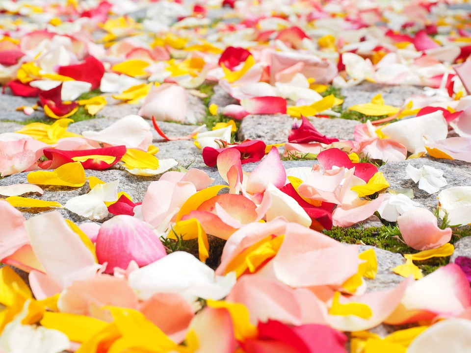 Multi-colored flower petals