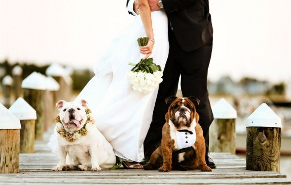 Dogs with bride and groom