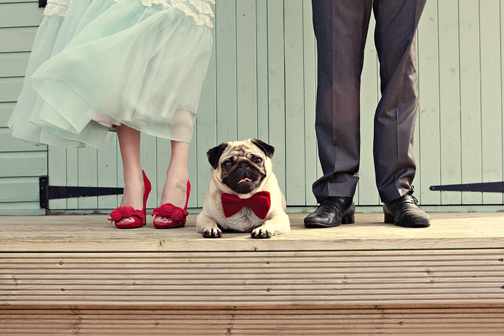 Should Pets be Included in the Wedding?