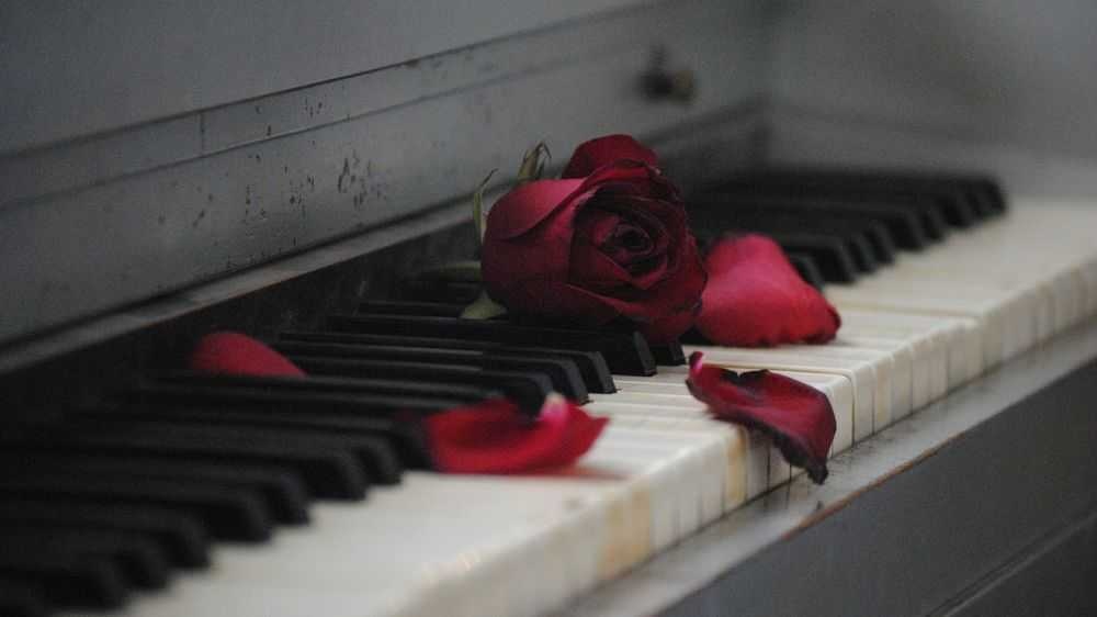 red rose at piano