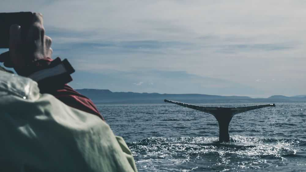 photographer photographs a whale