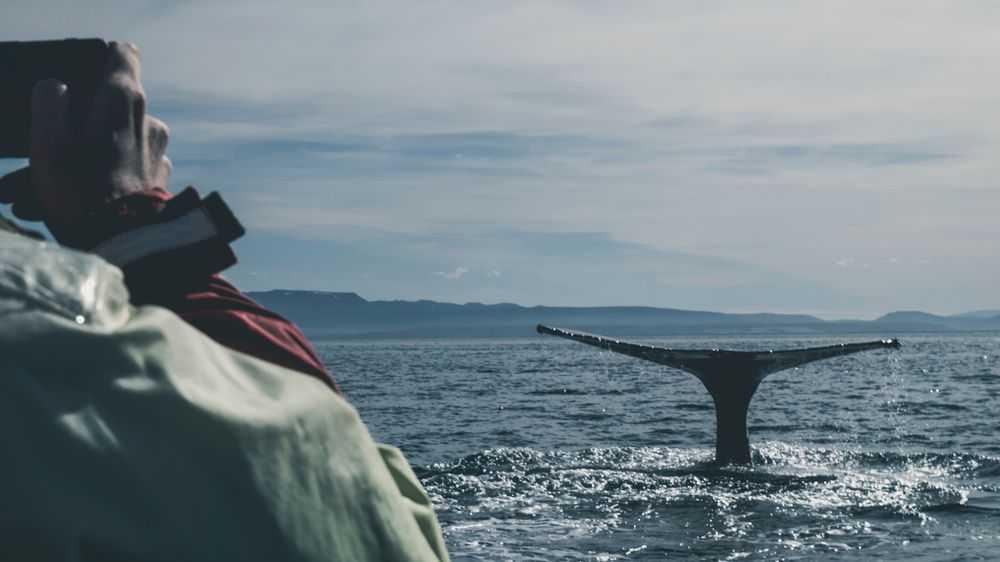 photographer photographs a whale
