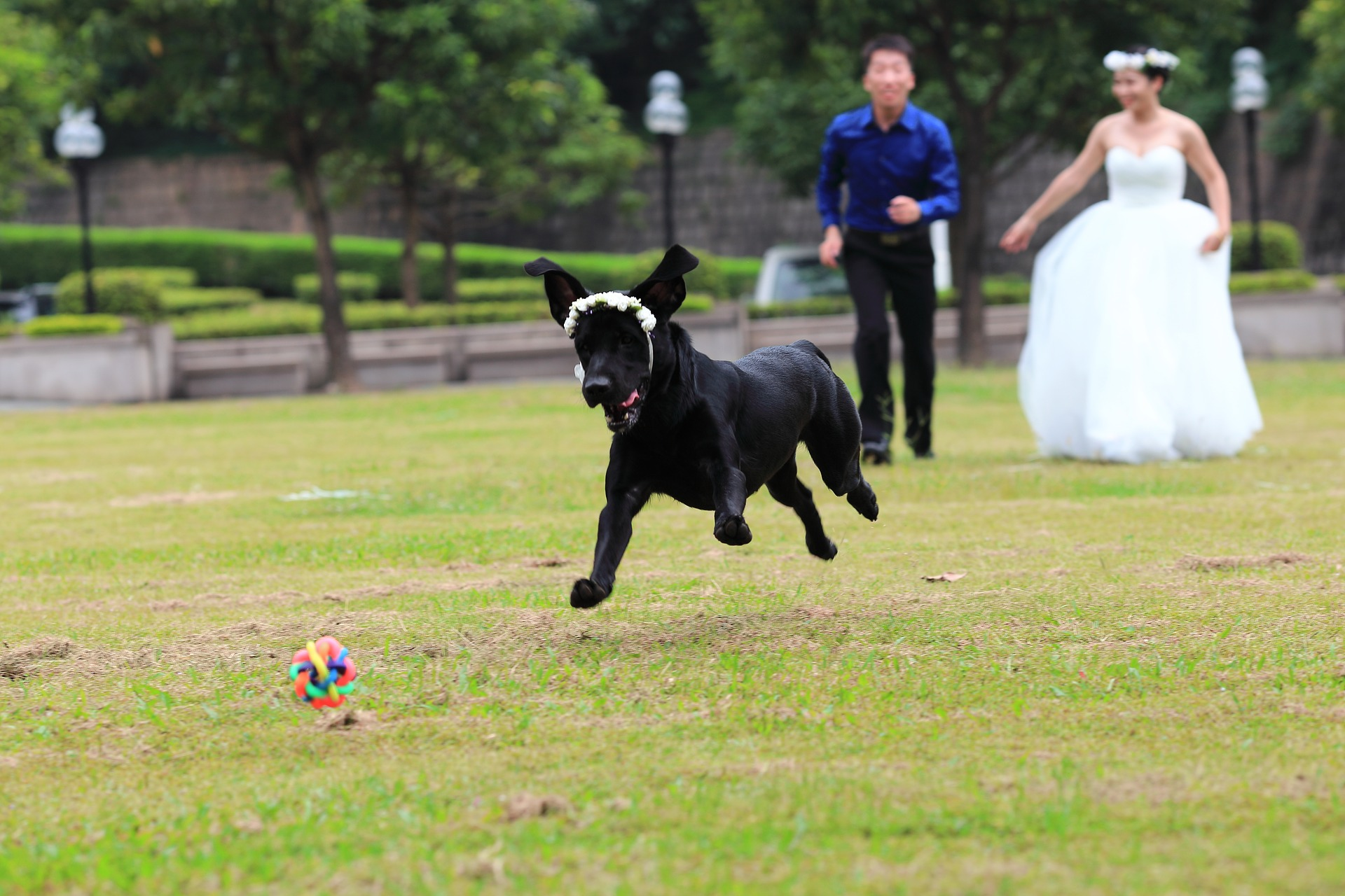 bride groom dog on lawn
