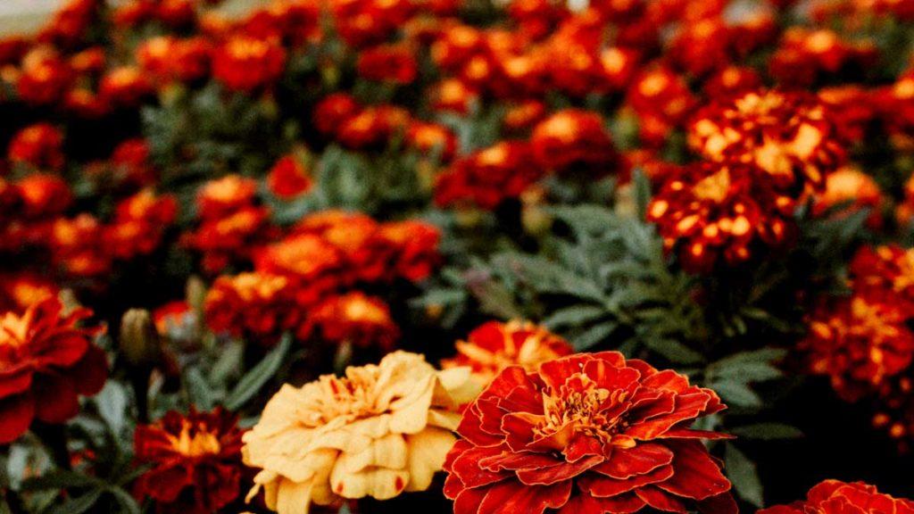 Botanic Garden for Wedding